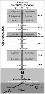 Biospezies-Konzept (REIN 2007)