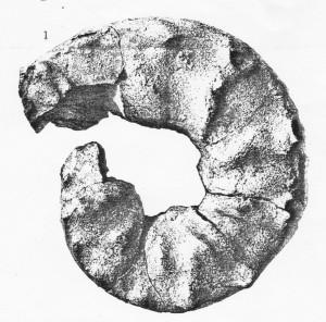 Lectotypus Ceratites praespinosus RIEDEL 1916